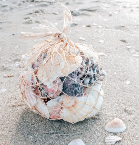 A photo of the Bag Of Shells product