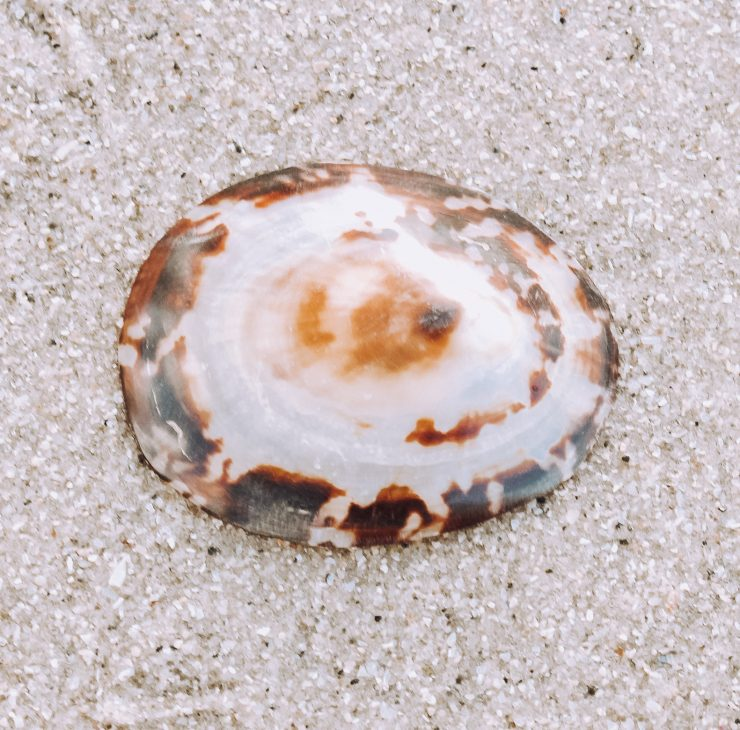 A photo of the Brown Clam Shell product
