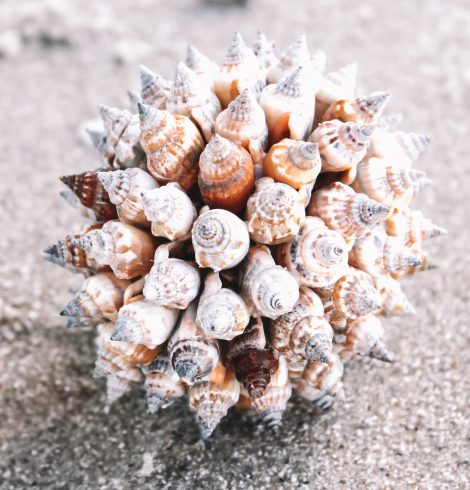 A photo of the Urceus Shell Ball product